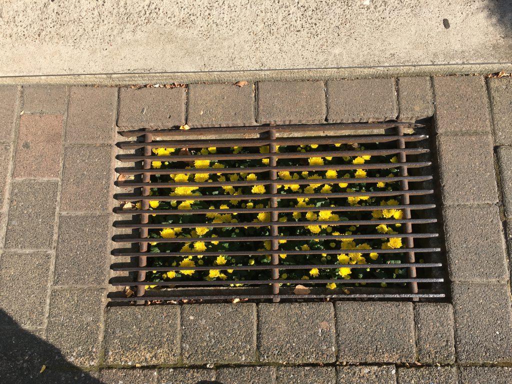 Das Foto zeigt Blumen unter Gittern.